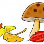 秋といえばきのこ。もみじ、落ち葉